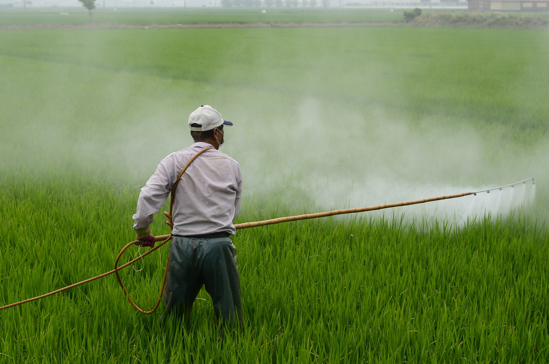 Pesticides, Cesar Chavez Day