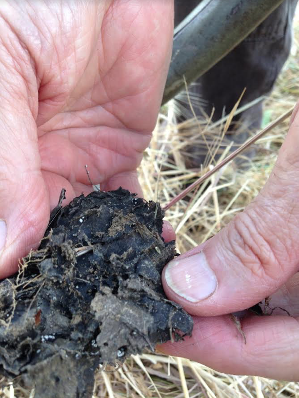 Soil on Paul's organic farm