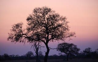 africa-sunset-1132749_1920